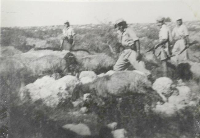17-eder-hashavooi